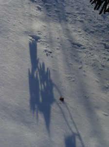 Shadow art with critter tracks.