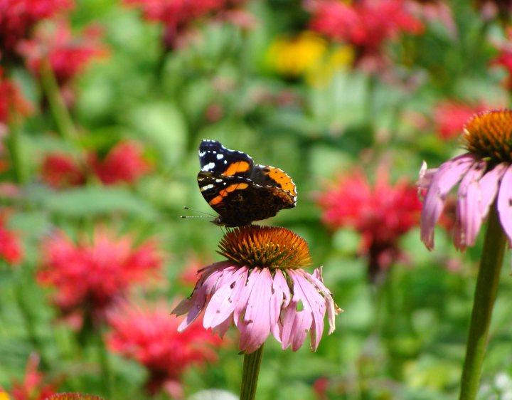 Butterfly20