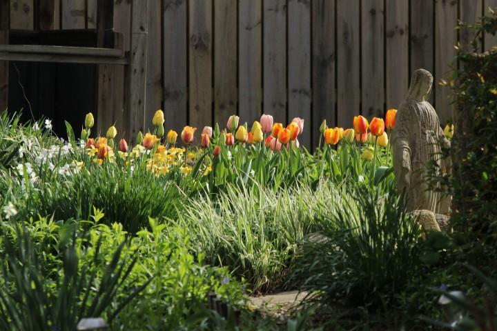 Tulips2017_01b